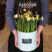 Tavaszi hagymás növény Flower box tavaszi virágokkal