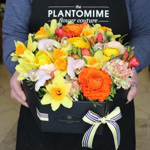 Plantomime Tavaszi Flower box vegyes virágokkal